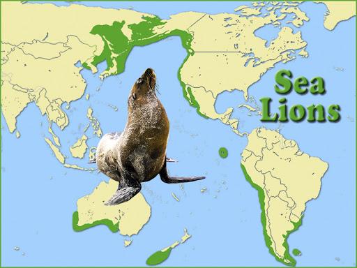 sea lion habitat worldwide
